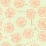 Floral background seamless pattern dandelion Stock Images