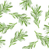 Floral background. Seamless pattern with rosemary. Royalty Free Stock Photography