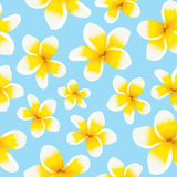 Floral background seamless pattern yellow plumeria Royalty Free Stock Images