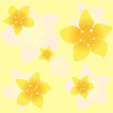 Floral background seamless pattern yellow plumeria Royalty Free Stock Photography