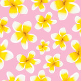 Floral background seamless pattern yellow plumeria Stock Photos
