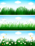 Floral background set. Vector illustration Royalty Free Stock Photo