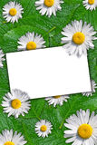 Floral background with space for text Royalty Free Stock Photos