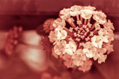 Floral background with space for text Royalty Free Stock Images