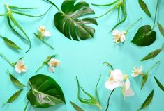 Floral background with a space for a text royalty free stock image