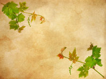 Floral background with space for text or image. Stock Photography