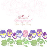 Floral Background with spring pansies Stock Image
