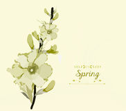 Floral background, spring theme, greeting card.  stock illustration