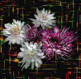 Floral background with stylized bouquet of white and violet chrysanthemums Stock Photo