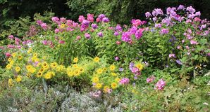 Floral Background of Summer Flowers. Blue, pink, purple, and yellow blossoms accented by silver and green foliage provide a pretty backdrop of summer flowers Royalty Free Stock Photography