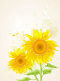 Floral background with sunflower Royalty Free Stock Image
