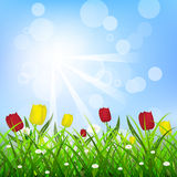 Floral background with sunlight, tulips and green grass. Illustration Stock Photography