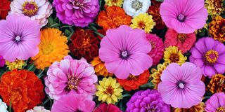 Floral background, top view. Good backdrop for a greeting or postcard. Floral background, top view. The texture of different garden flowers. Good backdrop for a royalty free stock images