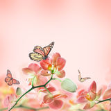 Floral background of tropical orchids Royalty Free Stock Photo
