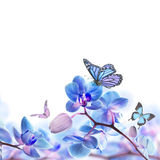 Floral background of tropical orchids Stock Photos