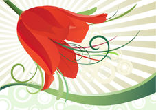 Floral background with tulip. Spring floral background with red tulip. Vector  illustration Stock Image