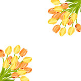 Floral background with tulips Royalty Free Stock Images