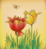 Floral background with tulips and butterfly Royalty Free Stock Photos