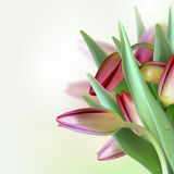 Floral Background with Tulips Royalty Free Stock Photography