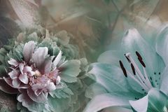 Floral background of turquoise lily and green-violet peony. Flowers close-up on a pink-turquoise background. Flower composition. Nature royalty free stock photography