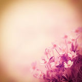 Floral background Royalty Free Stock Photography