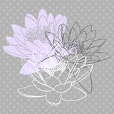 Floral background with water lily Royalty Free Stock Photography