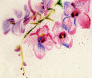 Floral background with watercolor orchid Stock Images