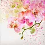 Floral background with watercolor orchid