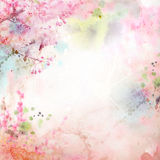 Floral background with watercolor sakura Stock Image