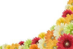 Floral background on white Royalty Free Stock Image