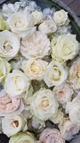Floral background. White and blue flowers. White roses and blue and white hydrangea. Floral carpet. Floral pattern. white roses. Soft colour Roses Background royalty free stock photography