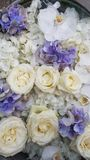 Floral background. White and blue flowers. White roses and blue and white hydrangea. Floral carpet. Floral pattern. white roses. Soft colour Roses Background stock images