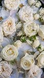 Floral background. White flowers. White roses and white peonys. Floral carpet. Floral pattern. white roses. Soft colour Roses Background. Rose Background royalty free stock photos