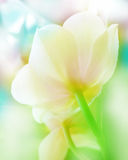 floral background with white orchid Royalty Free Stock Photography
