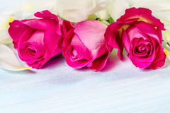 Floral background with white petals and roses. Royalty Free Stock Images