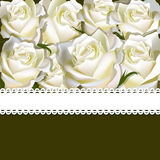 Floral background of white rose with ribbon. Floral copy-space Stock Photography