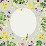 Floral background of wild flower chamomile, carnations and other vector illustration