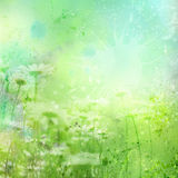 Floral Background With Watercolor Camomile Stock Photos