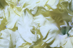 Floral background with yellow gladioluses. Macro Royalty Free Stock Photos