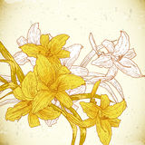 Floral background with yellow lilies Royalty Free Stock Photography