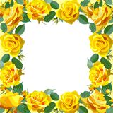 Floral Background with yellow roses Stock Images