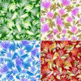 Floral backgrounds Royalty Free Stock Images