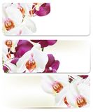 Floral backgrounds set with orchids Stock Images