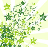 Floral backgrounds, vector illustration Royalty Free Stock Image