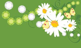 Floral banner with chamomiles and butterflies Royalty Free Stock Images