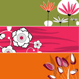 Floral banner design Royalty Free Stock Photos