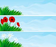 Floral banners. Three vector   backgrounds with  green grass and blossoming flowers - camomile and poppies Royalty Free Stock Photos