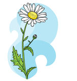 Floral beautiful camomile card. Vector Background Royalty Free Stock Images