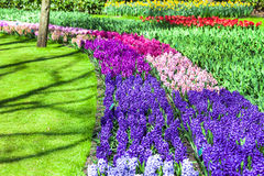 Floral beauty in Keukenhof park in Holland Royalty Free Stock Photo