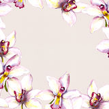 Floral beige background with white orchid flower. Hand painted aquarell drawing. On paper texture Royalty Free Stock Image